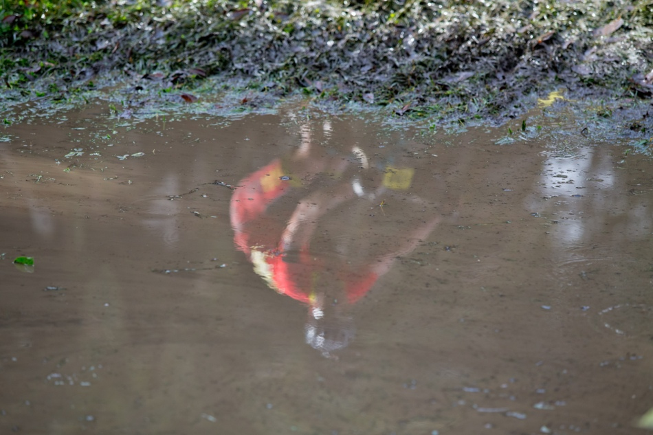 Murky Reflection of Andrew Vontz